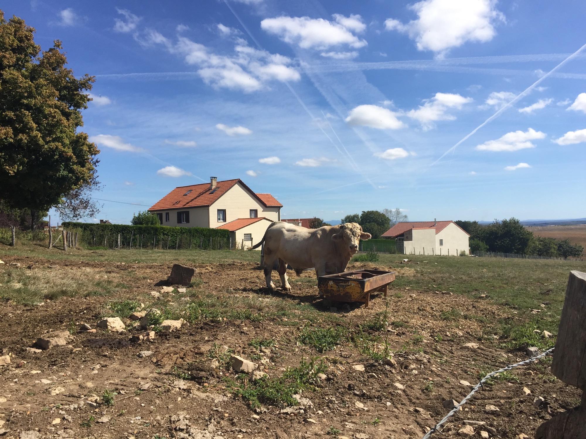 Montdoré